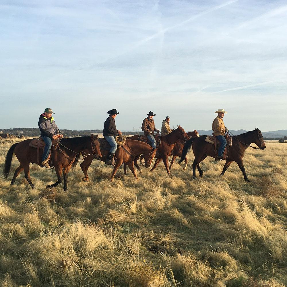 Cowboys on rangeland