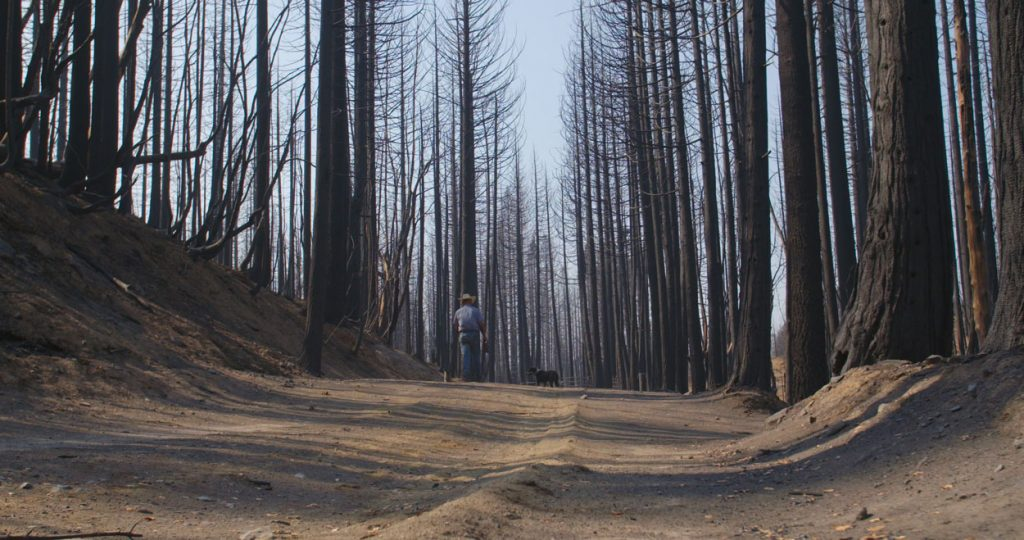 Forest after wildfire